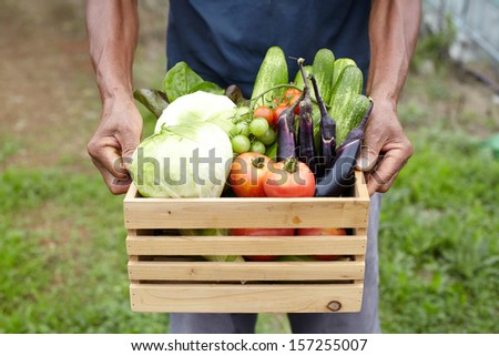 Wooden box filled fresh vegetables - stock photo