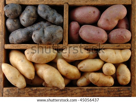 Wooden box filled with different colored fingerling potatoes. - stock photo