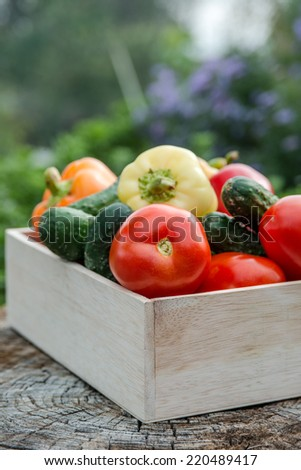 Wooden box with fresh vegetables (tomato, cucumber, bell pepper) in the garden, on the farm. Selective focus, Close up. Space for text. - stock photo