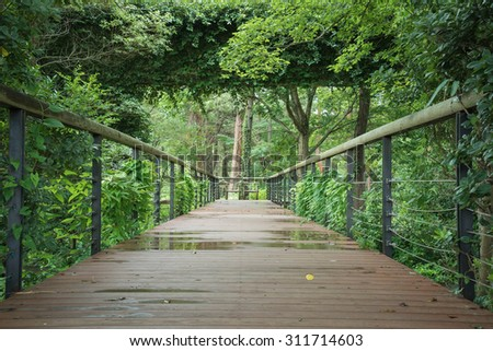 Wooden bridge in forest - stock photo
