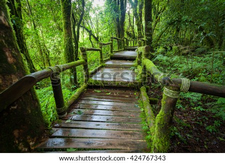 Wooden bridge in the forest at Doi Inthanon,Thailand - stock photo