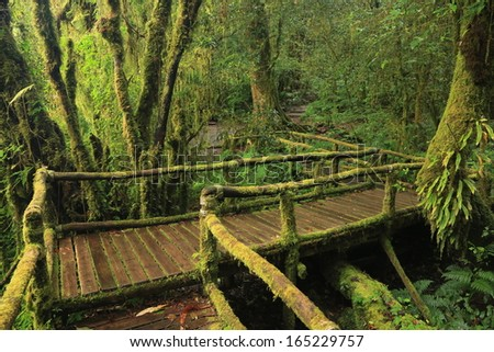 Wooden bridge in tropical rain forest, taken at Doi Inthanon National Park, Chiang Mai - Thailand. - stock photo