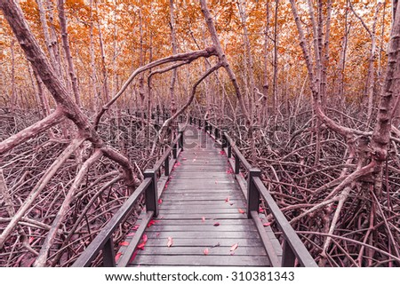 Wooden bridge the forest mangrove at Petchaburi, Thailand processed in tinted photo in red tone - stock photo