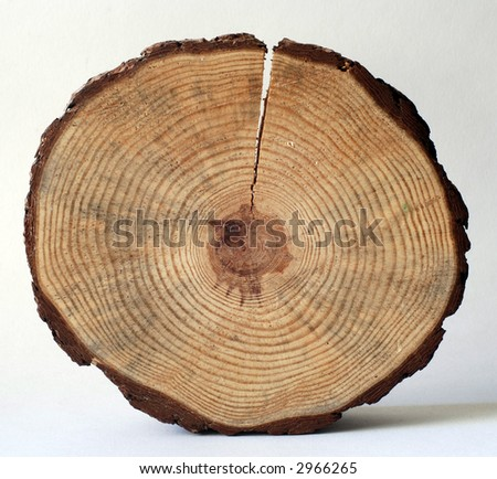 wooden circle with a split cut of the log - stock photo