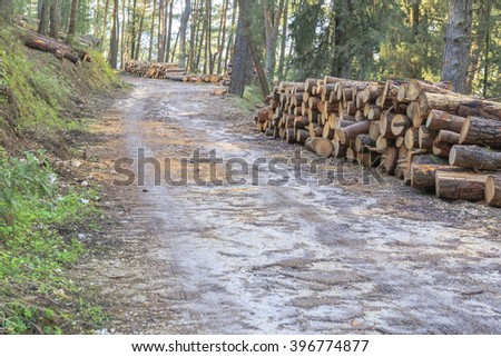 wooden forest, cut - stock photo