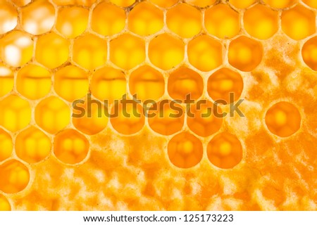 wooden frame with honeycomb full of honey - stock photo