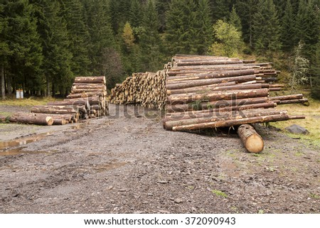 Wooden logs in the forest, stacked in a pile in Dolomites. Freshly chopped tree logs stacked up on top of each other in a pile. - stock photo