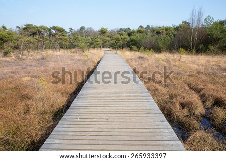 Wooden path in grass and forest leading through winters landscape. The wooden footpath divides the image in two almost identical and symmetrical parts. Concept of destination,walk,hike,nature,aim,goa, - stock photo
