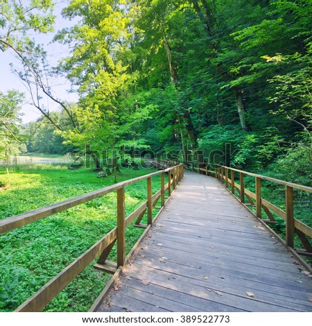 Wooden path in green forest - stock photo