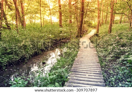 Wooden path in the forest along the river. - stock photo