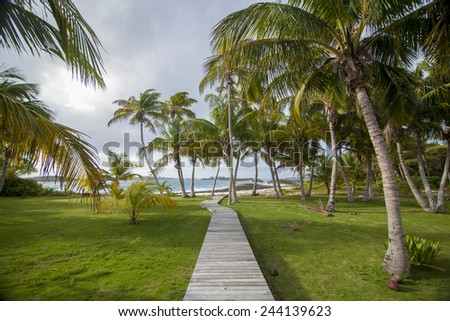 wooden path to caribbean sea through coconut palms - stock photo