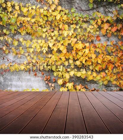 Wooden platform and Boston ivy background. - stock photo