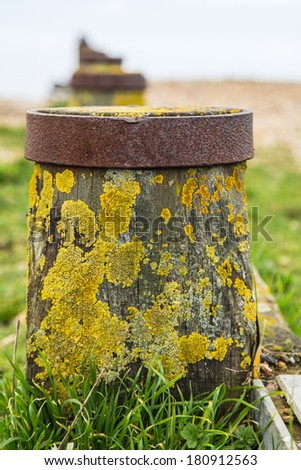 Wooden post forming part of a water breaker (groyne) on Whitstable beach - stock photo