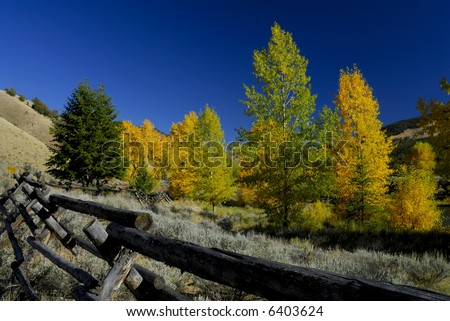 Wooden rail fence and fall color - stock photo