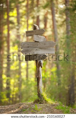Wooden track pointer on the road in the woods sunny summer day - stock photo