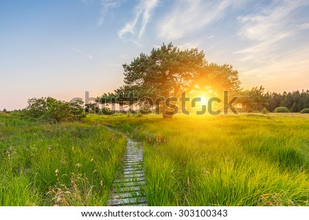 wooden trail to a bog pine at sunset in the hautes fagnes - stock photo