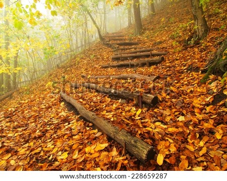 Wooden trunk steps in golden autumn forest, tourist footpath.  - stock photo