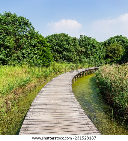Wooden walkway in forest - stock photo