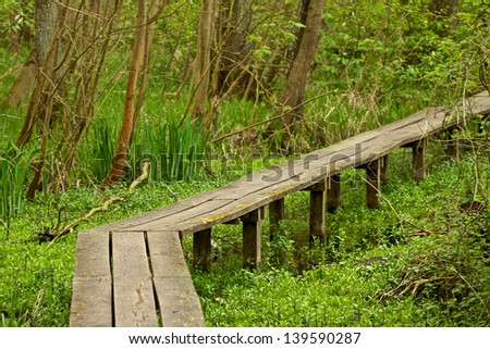 Wooden walkway through a swamp with trees and undergrowth along the way - stock photo