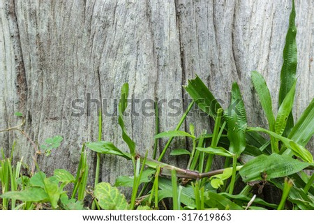 Wooden with a green grass backgrounds - stock photo