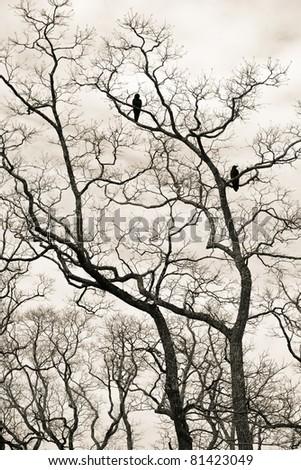 woodland - stock photo