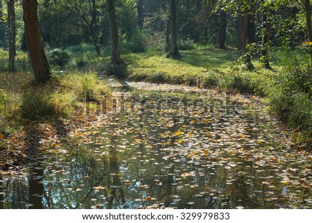 Woodland and Stream with Colorful Autumn Leaves - stock photo