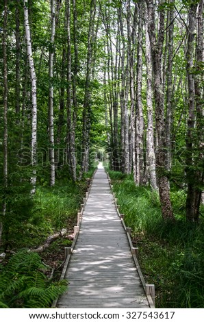 Woodland Path through Birch Trees in Lush Green Forest - Scenic Wooden Footpath - stock photo
