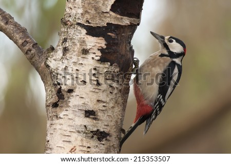 Woodpecker clinging to a tree trunk - stock photo