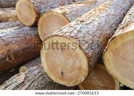 Woodpile of cut trees in the lumberyard - stock photo