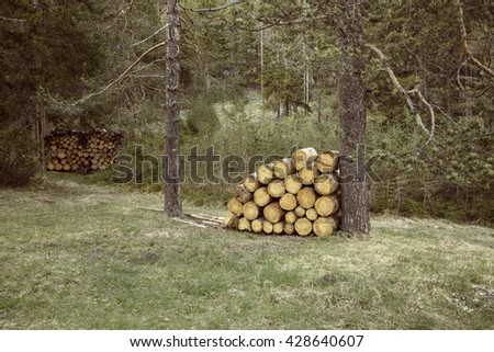Woodpiles of big pieces of cut timber, wooden trunks in a forest setting. Forestry industry, natural conservation, sustainable energy resources concept - stock photo