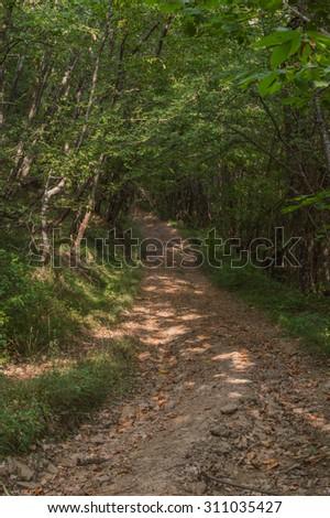 Woods - stock photo