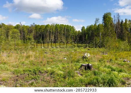Woods logging  stump after deforestation hack woods   - stock photo
