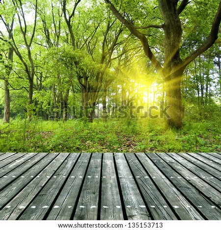 Woods under the sun, the wooden structure of the platform. - stock photo