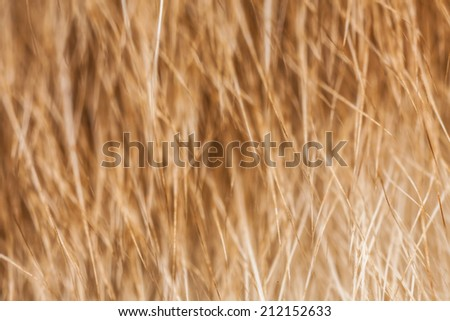 wool animal - stock photo