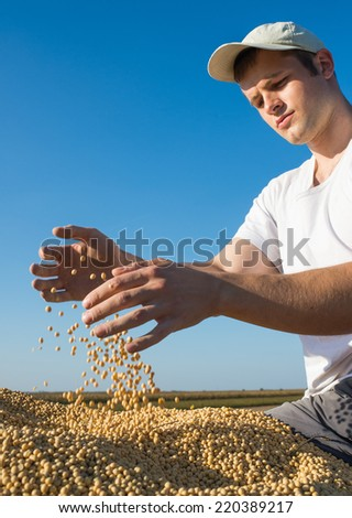 Worker holding soy beans after harvest  - stock photo