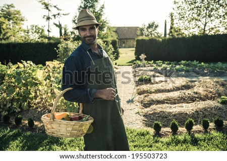 Worker with basket of organic vegetables, picked up from a synergistic vegetable garden - stock photo