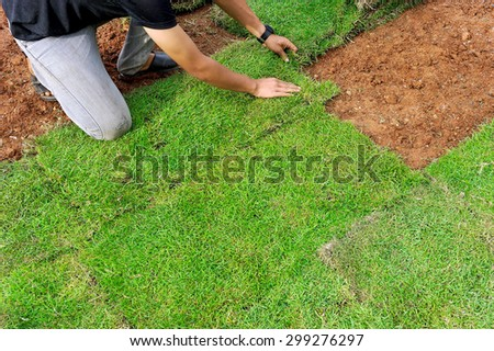 Workers are planting grass in the backyard. - stock photo