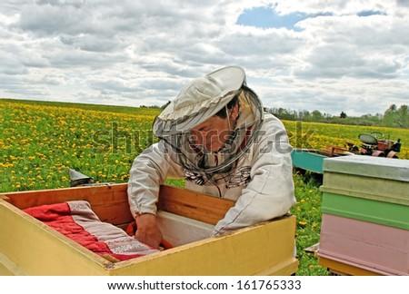 Working apiarist in a spring season.  - stock photo