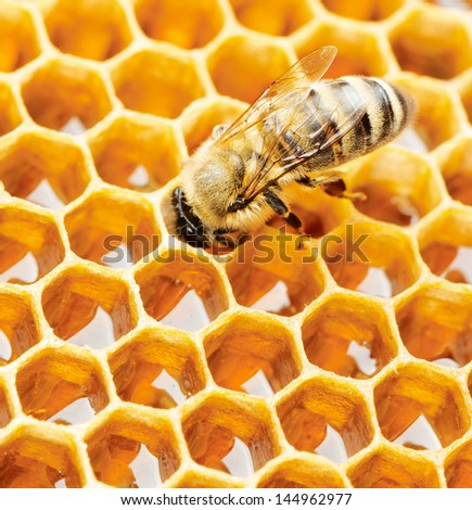 Working bee on honeycomb - stock photo