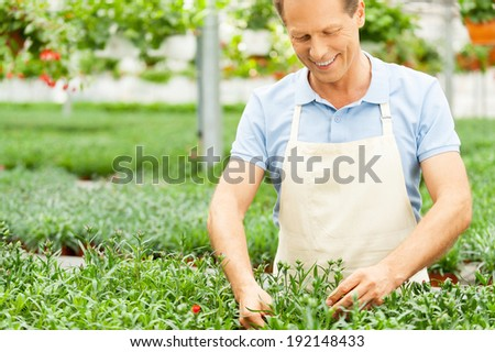 Working in green environment. Portrait of man in apron taking care of plants while standing in greenhouse - stock photo