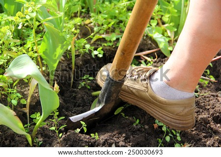 Working Leg Steps Iron Shovel to Dig Soil - stock photo