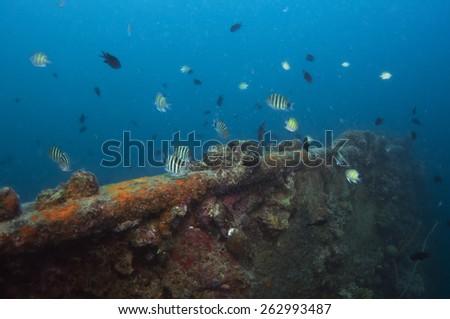 World war II shipwreck diving in Coron , Palawan, Philippines. - stock photo