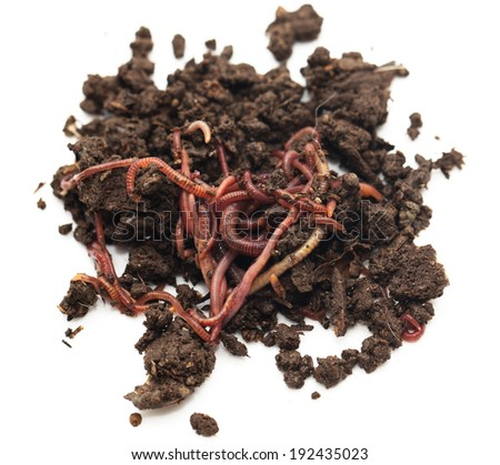 worm in the ground on a white background - stock photo