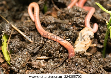 worms in the ground - stock photo
