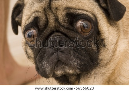 Worried Expression - stock photo