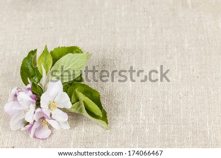 Woven linen background with spring apple blossom - stock photo