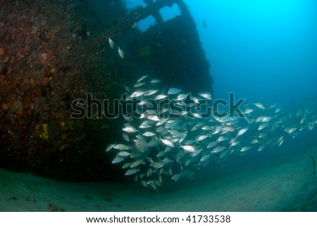 wreck and fish - stock photo