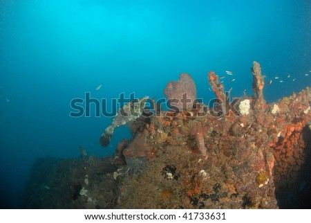 wreck dive and fish - stock photo