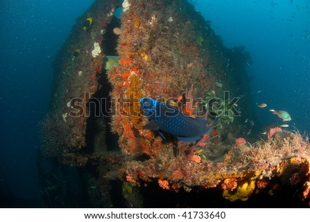 wreck diving with fish - stock photo