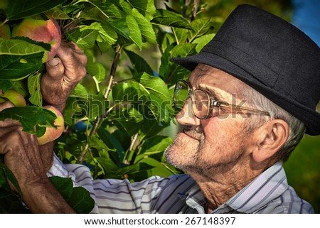 Wrinkled and expressive old farmer checking the fruits of his labor. - stock photo